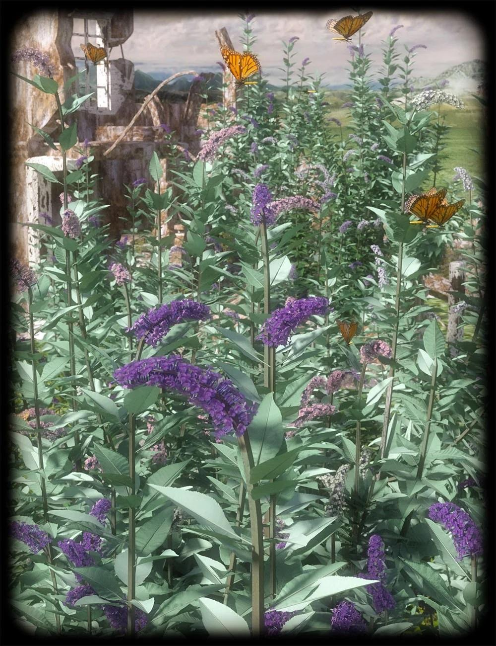 Buddleia - Butterfly Bushes