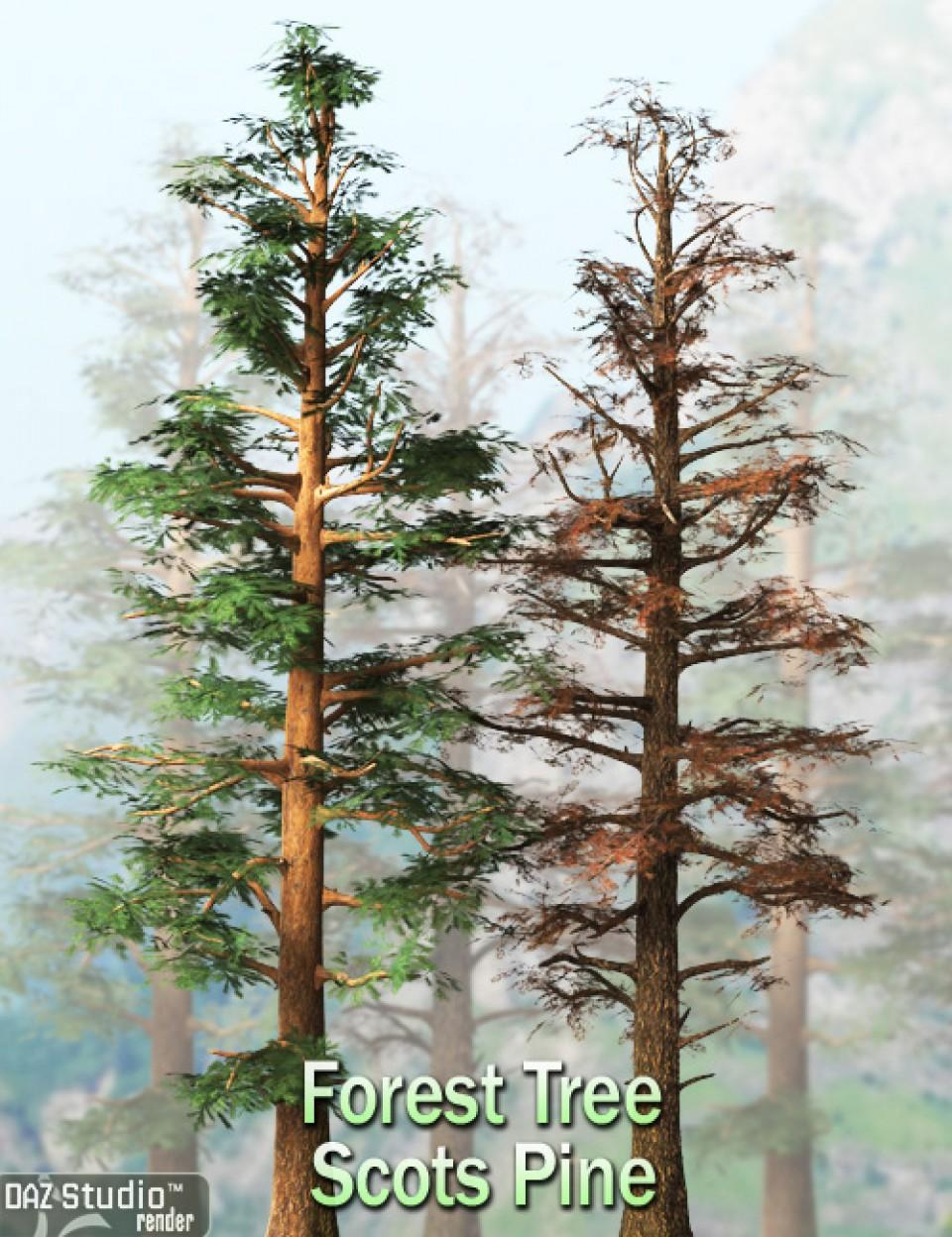 Forest Tree - Scots Pine