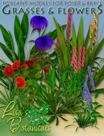 Lisa's Botanicals - Grasses & Flowers