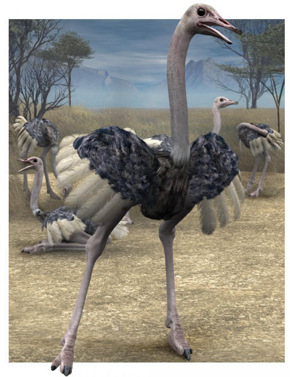 Noggin's Ostrich