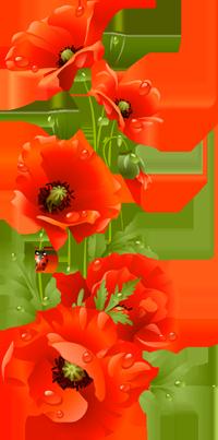 http://ipic.su/img/img7/fs/0_13fb1a_524fc15_orig-kopija.1587625589.png