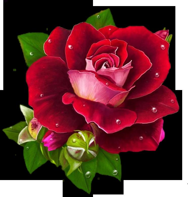 http://ipic.su/img/img7/fs/0_a3dae_b1592526_orig.1587626034.png