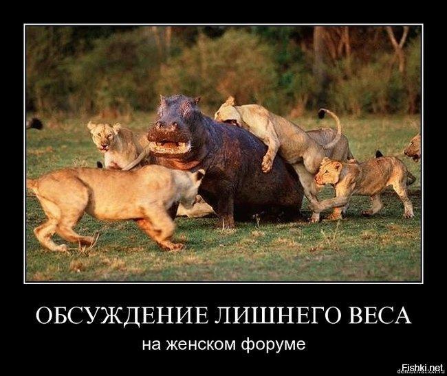 http://ipic.su/img/img7/fs/1111.1499413293.jpg