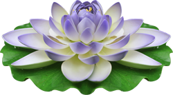 http://ipic.su/img/img7/fs/9911066-kopija.1587626867.png