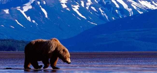 Америка, верни нашу Аляску