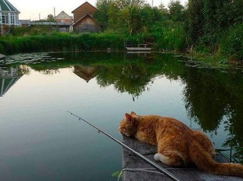 Когда клюёт рыба