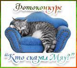 Радуга рукоделий Koty.1562141560