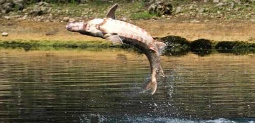 Ловля осетровых рыб