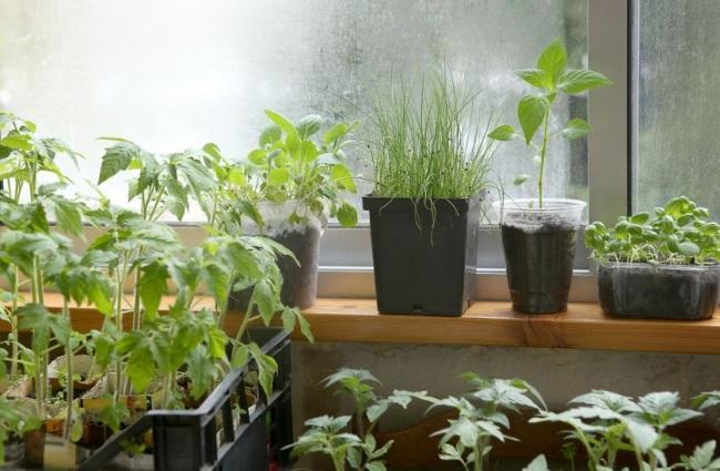 Уход за растениями в феврале