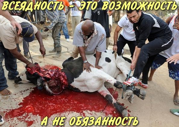http://ipic.su/img/img7/fs/VSEYADNOST-ETOVOZMOZHNOSTANEOBYAZANNOST.1485889036.jpg