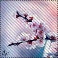 http://ipic.su/img/img7/fs/WmvjqMANIeQ88888g78g.1367374952.jpg