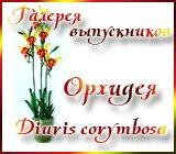 Галерея выпускников Орхидея Diuris corymbosa Anons.1435913281