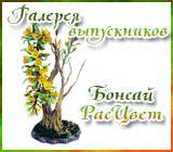 Галерея выпускников Бонсай РасЦвет Anons.1557878738