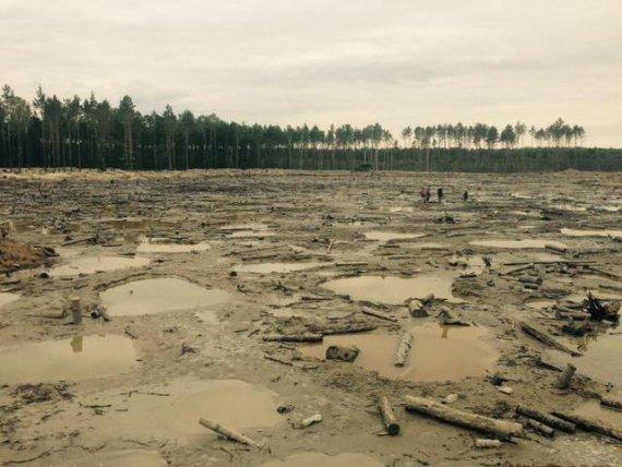 Запасы янтаря в Волынской области оценивают в $4 млрд, - глава ОГА - Цензор.НЕТ 6526