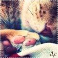 http://ipic.su/img/img7/fs/cats112.1365847766.jpg