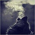 http://ipic.su/img/img7/fs/cats1122.1365848090.jpg