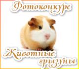 """Фотоконкурс """"Животные грызуны"""" Gryzuny.1515677460"""