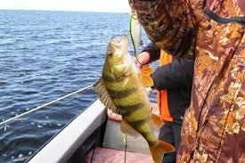 Отдых и рыбалка в Астрахани