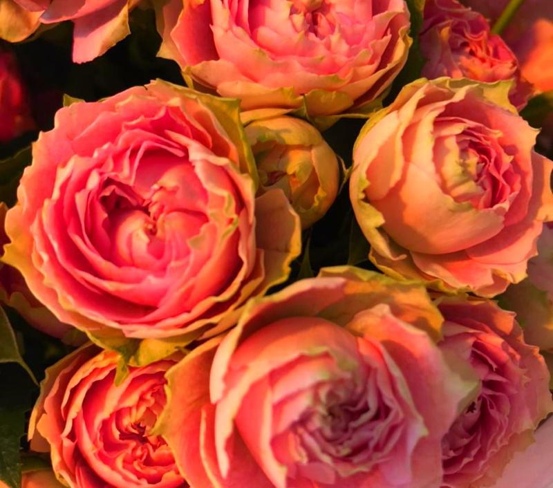 А бабочка над красной розой