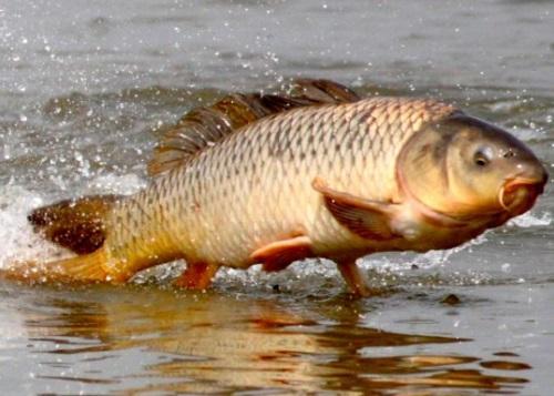 Рыбачим с прикормкой на сазана