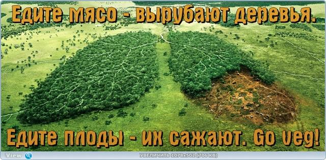 http://ipic.su/img/img7/fs/thumb.1484371215.jpg