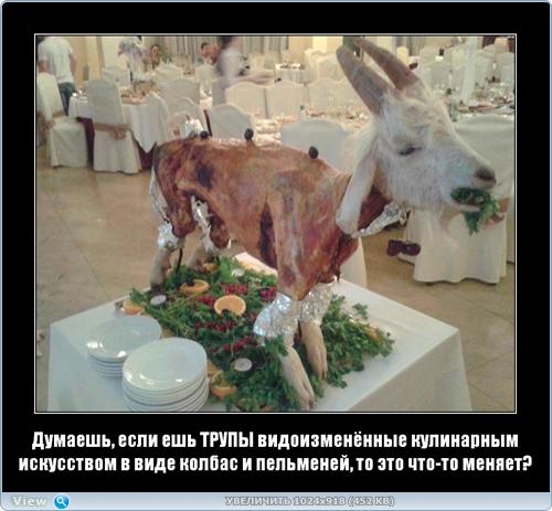 http://ipic.su/img/img7/fs/thumb10.1482218508.jpg