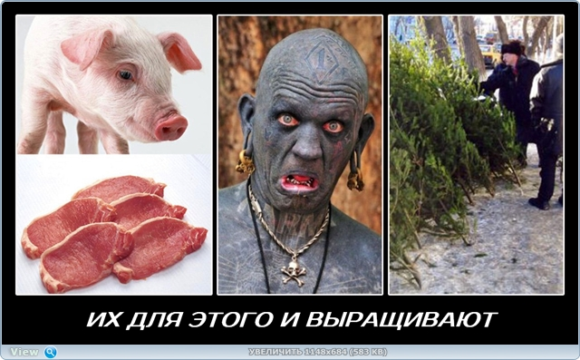 http://ipic.su/img/img7/fs/thumb5.1481802036.jpg