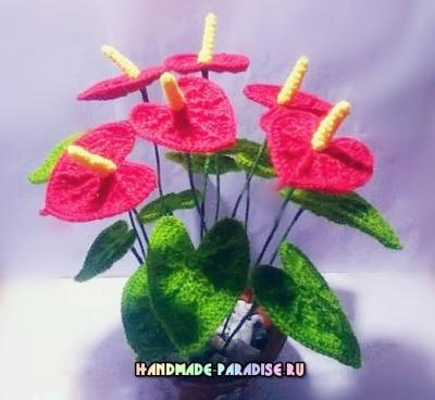 Антуриум или цветок Фламинго крючком Anturium-ili-tsvetok-Flamingo-kryuchkom.1552622904