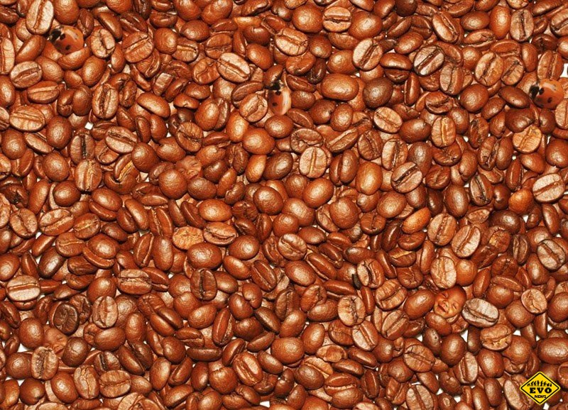http://ipic.su/img/img7/fs/1343117821_coffee-faces-and-lady-bugs-optical-illusion.1536150554.jpg